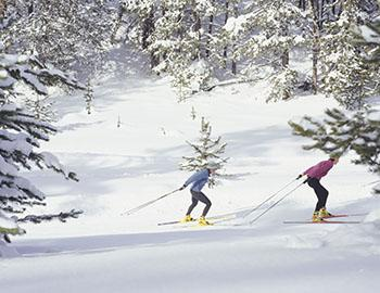 Cross country skiers in Mammoth Lakes, CA